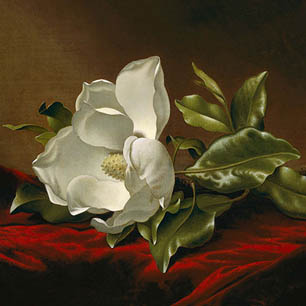 Martin Johnson Heade Canvas Art Prints