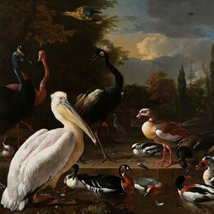 Melchior d'Hondecoeter Canvas Art Prints